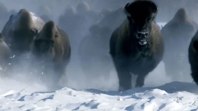 Frozen Planet: Image 13